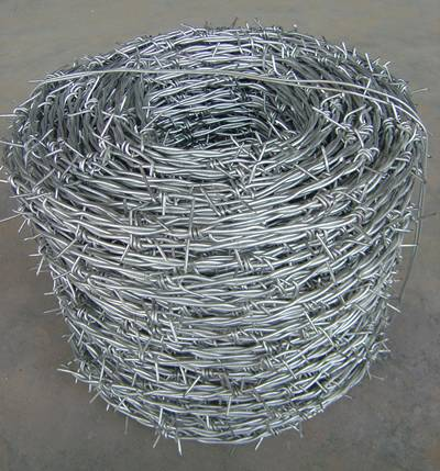 A big coil of galvanized barbed wire with traditional twist type.